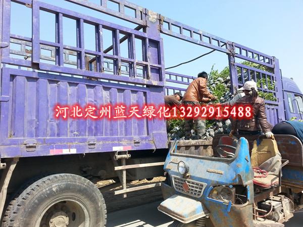 """河北省霸州经济技术开发区于一九九六年九月被省政府批准为省级经济技术开发区,规划面积8.6平方公里,核准面积6.1平方公里,下辖三个社区。园区拥有便捷的交通区位,北距北京76公里,东临天津70公里,西去保定70公里,处在""""大北京经济圈""""的中心位置,市内京九铁路、津霸铁路联络线、保津高速公路、大广高速、廊沧高速、106、112两条国道及建设中的保津高铁贯境而过,形成了""""四个黄金""""十字交叉。建区以来,开发区坚持""""全面规划、分步实施、滚动发展""""的发展"""
